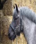 """Lænkegrime """"Ideal"""" til Store heste"""